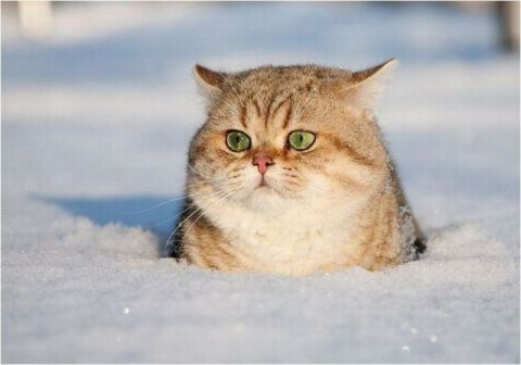 Top 10 Images of Cats in The Snow