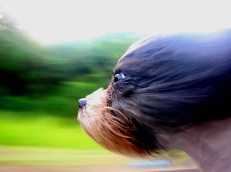 Dog Travailing at High Speed in the Wind With its Head out a Car Window