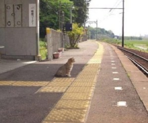 Ten Cats Waiting Who Have More Patience Than Their Owners