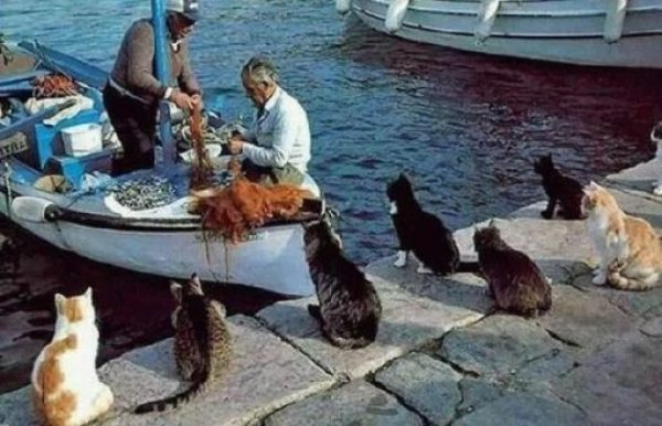 Cats waiting for the fishing boat to return