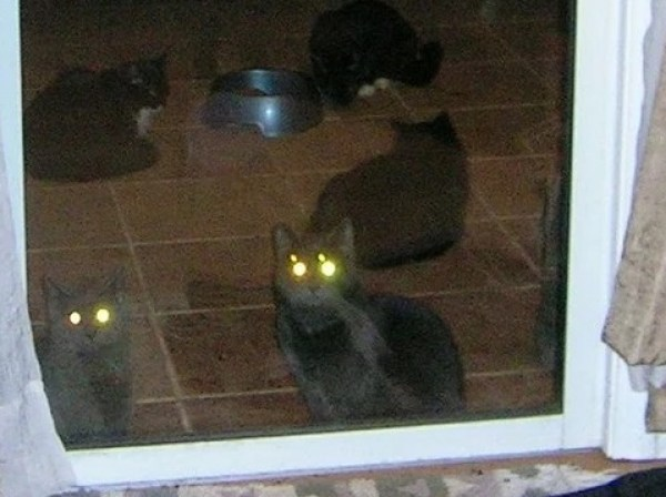 Laser Eyed Cats