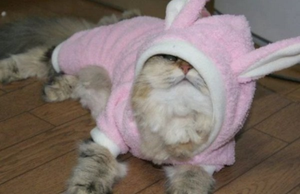 Cat Dressed as the Easter Bunny