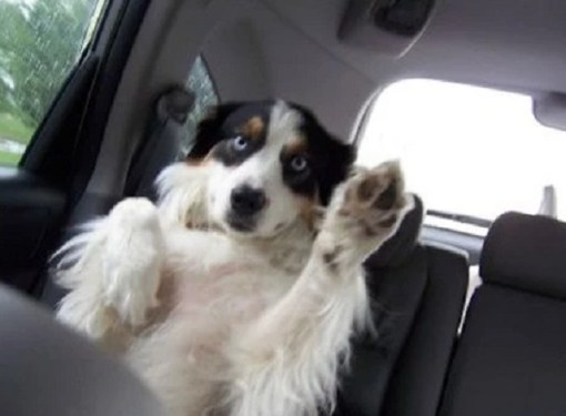 Dog Waving Hello