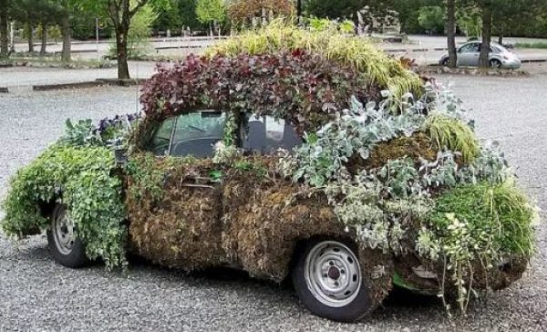 Black Volkswagen Beetle Covered in Plants