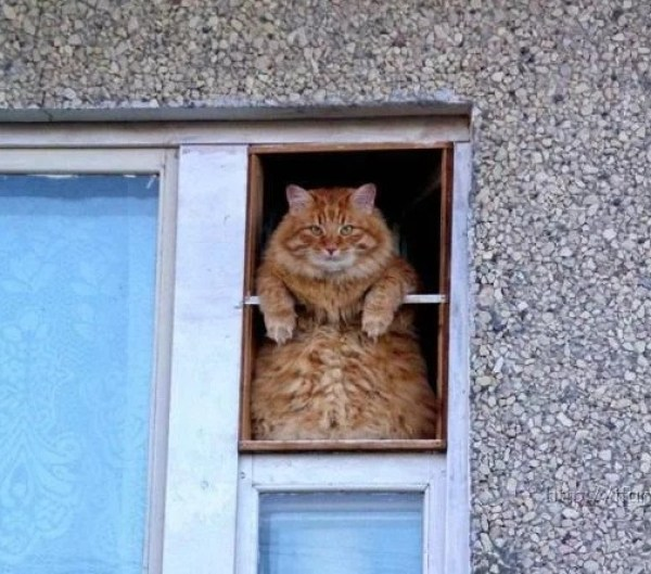 Ginger cat looking out of a window