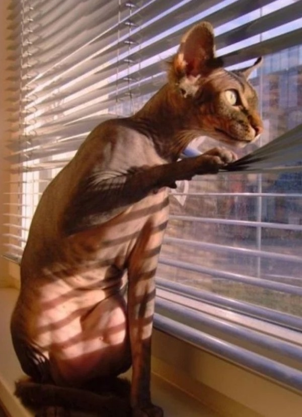Cat looking out of a window