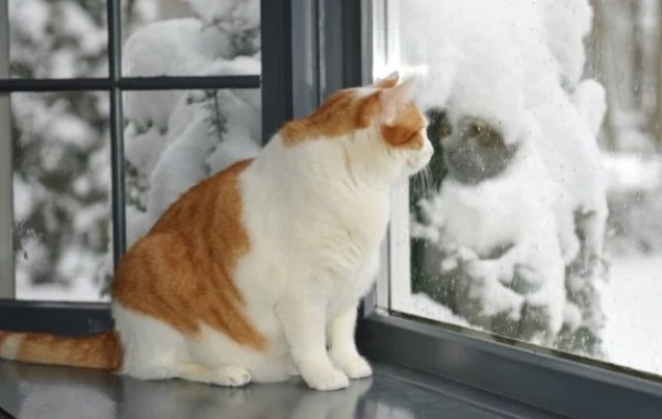 Cat looking out of a window at the snow