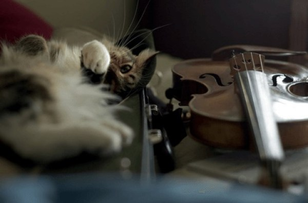 cat playing a violin