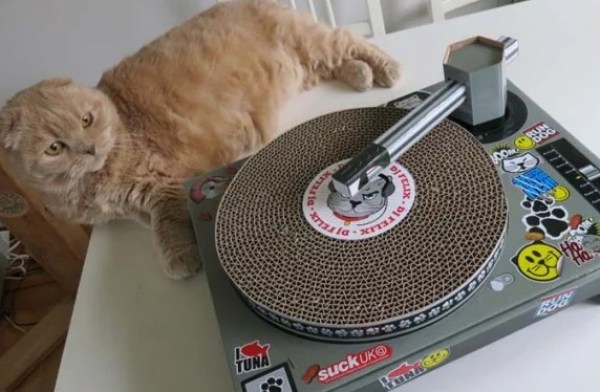 Cat playing DJ decks