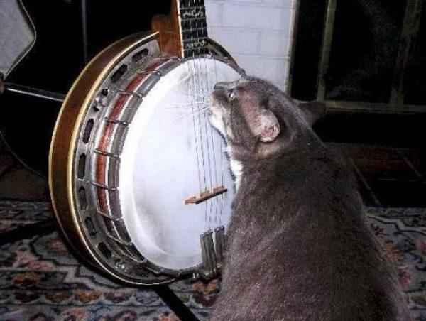 Cat playing Banjo