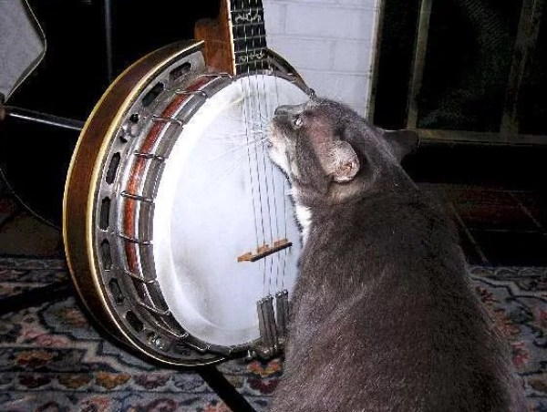 Cat playing Banjo