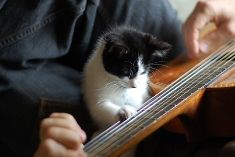 Top 10 Images of Cats Playing Musical Instruments