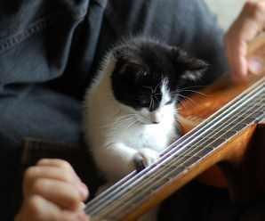 Ten Cats Playing Musical Instruments You Don't Need to Hear