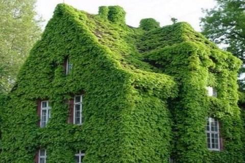 Ten Amazing Houses Covered in Something Strange