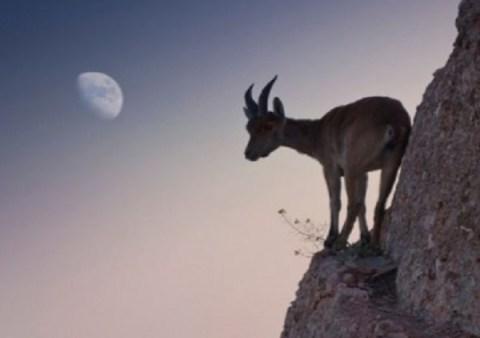 Ten Great Photos of Goats Climbing on Various Things