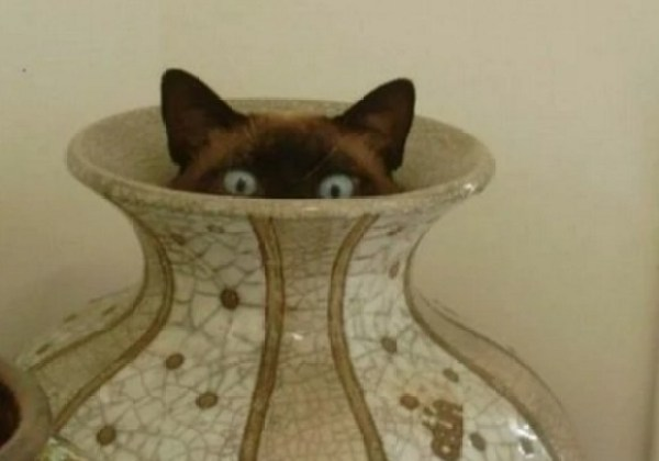 Creepy Cat Poking out of a Vase