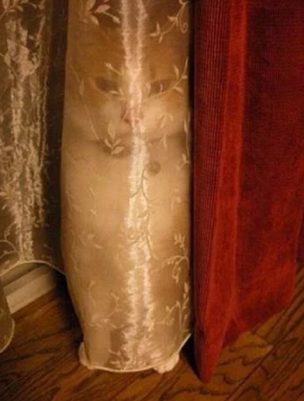 Creepy Cat Behind a Net Curtain