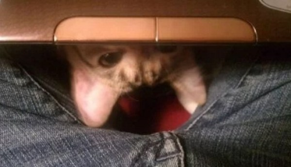 Creepy Cat Poking Out From Under a Laptop