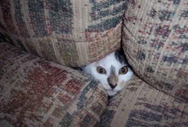 Creepy Cat Poking Head Through Sofa
