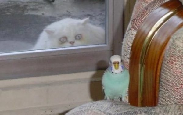 Creepy Cat Looking Through Window at a Bird