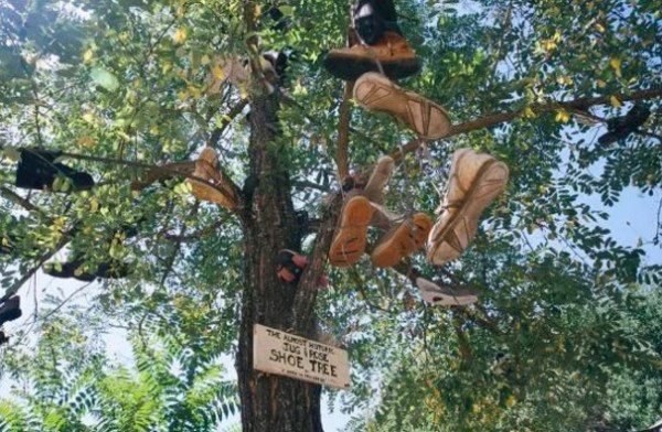 Shoe Tossing: Historical Shoe Tree