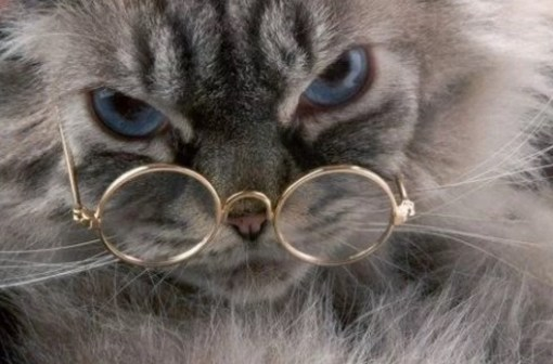 Persian cat Wearing Glasses