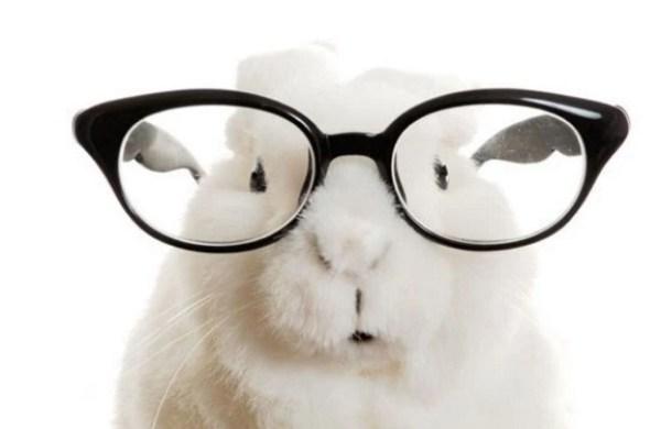 Rabbit Wearing Glasses
