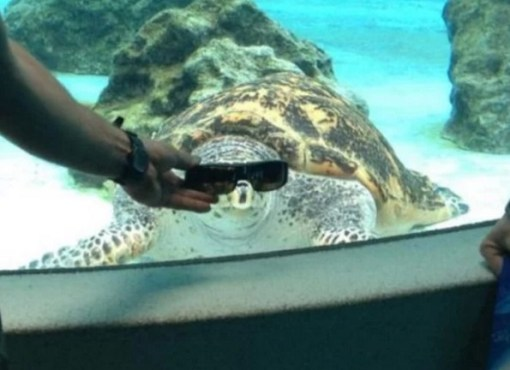 Turtle Wearing Glasses