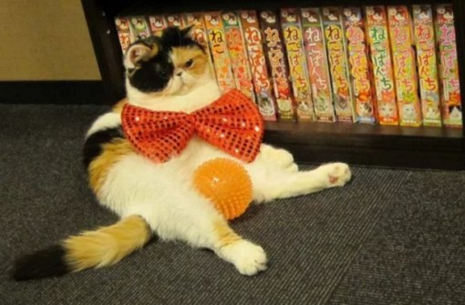 Cat Wearing an Orange, Oversized Bow Tie