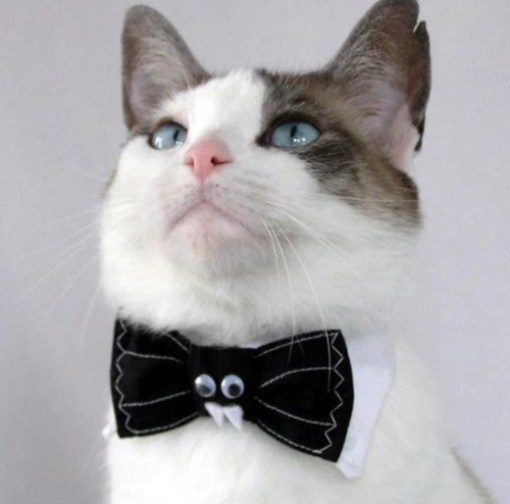 Cat Wearing a Vampire Black Bow Tie