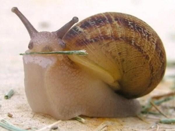 Snail Fetching a Stick