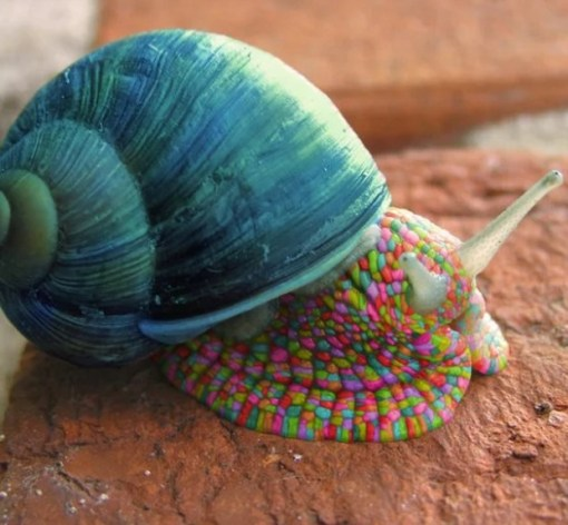 Multi Coloured Snail