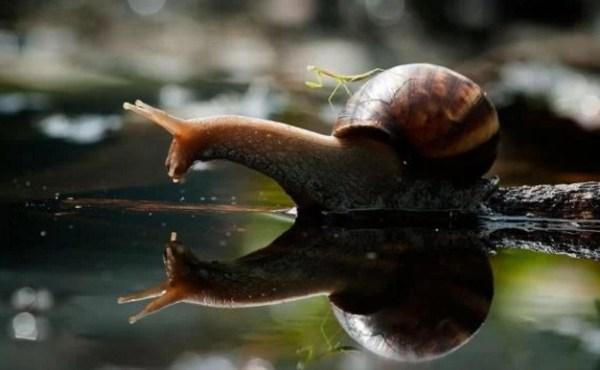 Praying Mantis on Snails Back