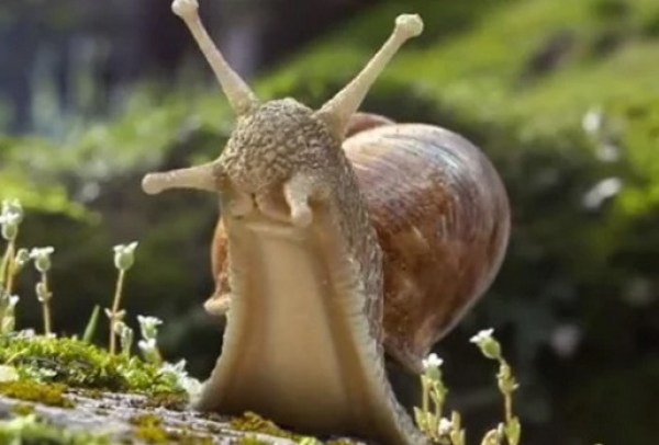 Snail Stood up Tall