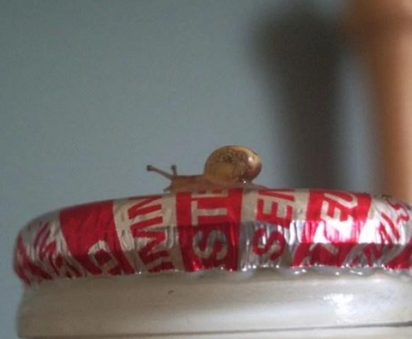Tiny Snail on Milk Bottle Top