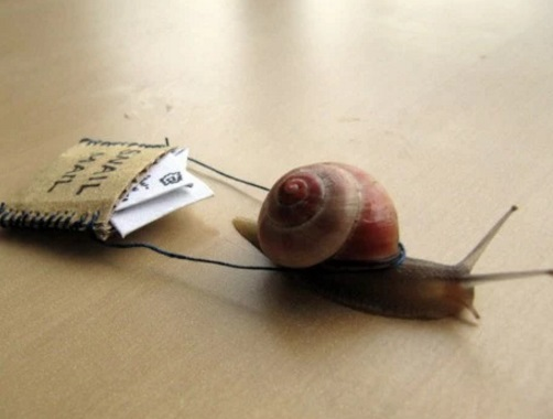 Snail Delivering Mail