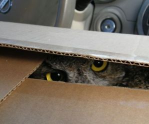 Top 10 Images of Animals in Boxes