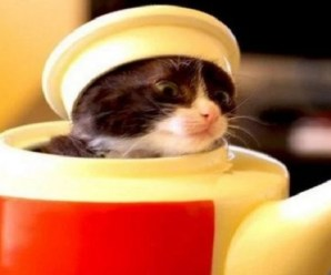 Ten Ninja Cats in Disguise Who Could Hide Anywhere!