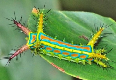 Ten of the Worlds Most Amazing Caterpillars You'll Ever See