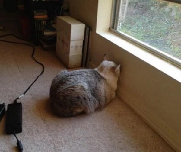 Strange Cat Staring at a Wall