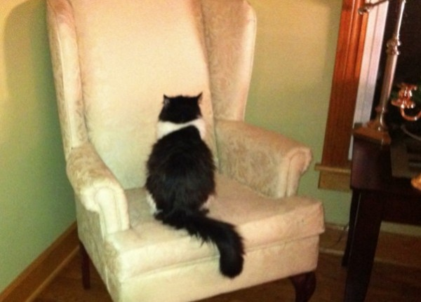 Strange Cat Staring at an Armchair