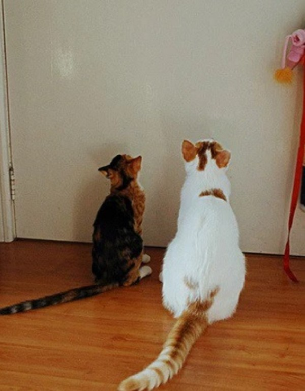 Strange Cats Staring Into a Door