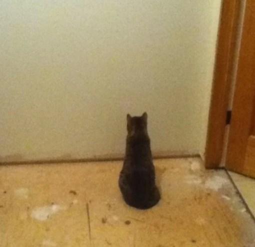 keep cats out of sandbox