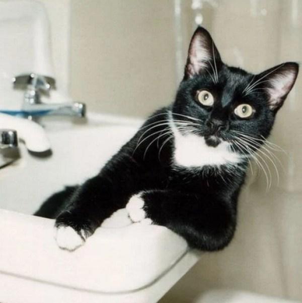 Black Cat in a Sink