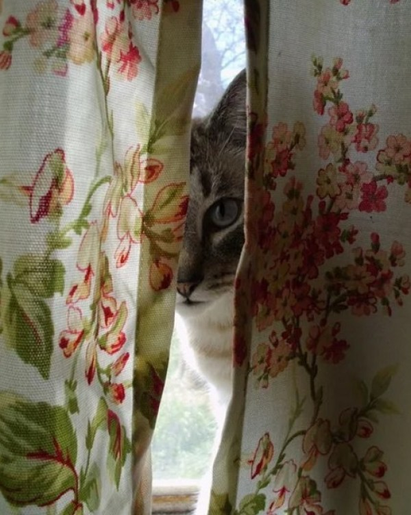 Cat hiding behind curtain