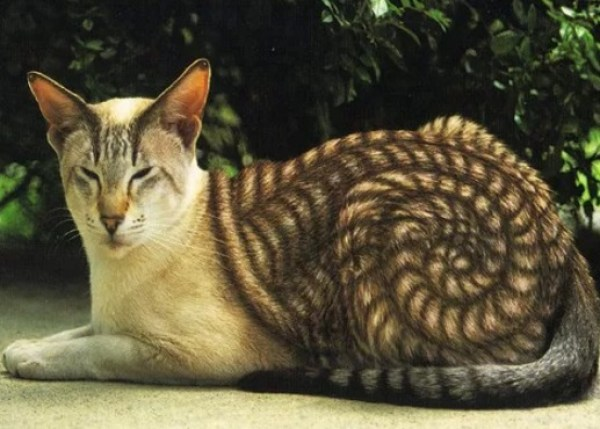 Cat painted to look like a snail