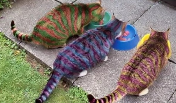 Cats painted to look like their food bowls
