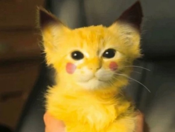 Cat painted to look like Pikachu