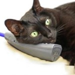 Ten Animals on the Phone Running Up You Phone Bill