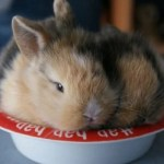 Ten Very Cute but Tired Animals Asleep in Their Food Bowls